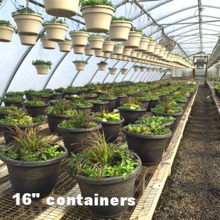16 inch containers